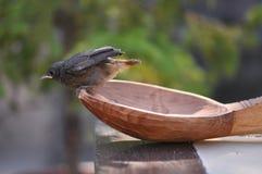 Petits oiseau et cuillère Photo stock