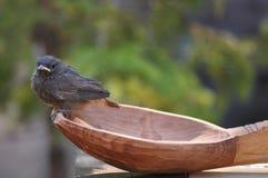Petits oiseau et cuillère Photographie stock libre de droits