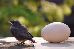 Petits oiseau et oeuf Images stock