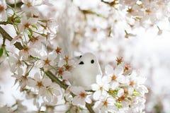 Petits oiseau et volière au printemps avec la fleur Images libres de droits