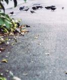Petits oiseaux Photo libre de droits
