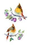 Petits oiseaux d'aquarelle Photographie stock libre de droits