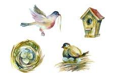 Petits oiseaux d'aquarelle Photo stock