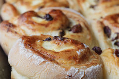 Petits pâtés avec le fromage blanc et les raisins secs Pâtisserie russe photographie stock