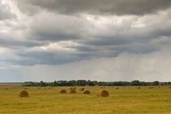 Petits pains de champ et d'herbe d'automne images libres de droits