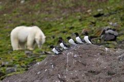 Petits pingouins et ours blanc Images libres de droits
