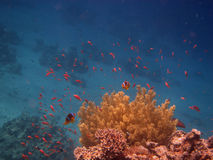 Petits poissons Images libres de droits