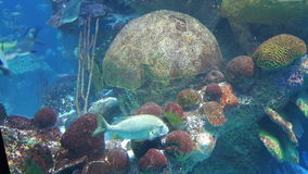 Petits poissons bleus Photo stock