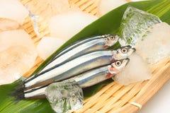Petits poissons crus Image libre de droits