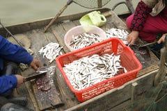Petits poissons dans le bateau Photographie stock libre de droits