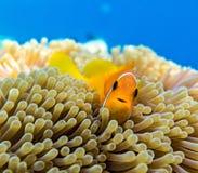 Petits poissons dans un océan Images libres de droits