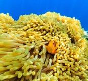 Petits poissons dans un océan Photos stock