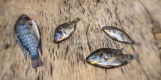 Petits poissons morts photographie stock