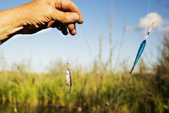 Petits poissons placés sur le crochet comme amorce Photos stock