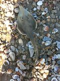 Petits poissons sur la plage Image libre de droits