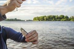 Petits poissons sur un crochet et ligne de pêche dans des mains humaines Photographie stock