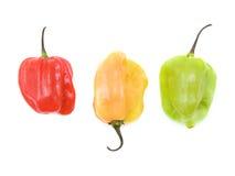 Petits poivrons très chauds Photo stock