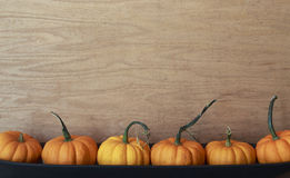 Petits potirons oranges alignés dans une rangée Photo stock