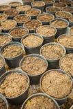 Petits pots avec la terre images stock