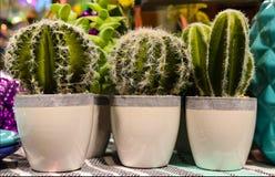 Petits pots contenant des cactus se reposant sur l'étagère entre d'autres articles colorés - décor photographie stock