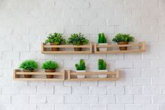Petits pots d'usine placés sur l'étagère en bois sur le mur blanc de birck image libre de droits