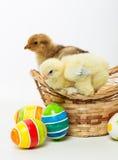 Petits poussins et oeufs de pâques Photographie stock libre de droits
