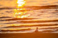Petits vagues et oiseau de mer image stock