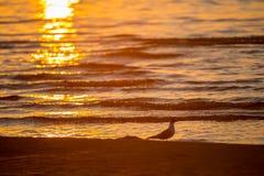 Petits vagues et oiseau de mer photo libre de droits