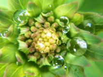 Petits wildflowers de bord de la route macro dans le jour pluvieux Image libre de droits