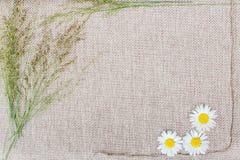 Petits wildflowers sur un fond beige Photographie stock