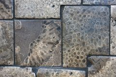 Petoskey stone tile Royalty Free Stock Photography