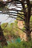 Petovac黑山2015年6月,海和老杉木在峭壁 库存照片