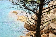 Petovac Montenegro june 2015 , lonely pine on a background of yellow rocks royalty free stock images