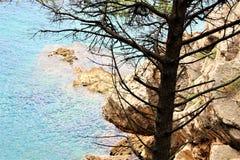 Petovac Montenegro junio de 2015, pino solo en un fondo de rocas amarillas imágenes de archivo libres de regalías