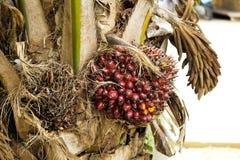 Petróleo de palma Imagen de archivo
