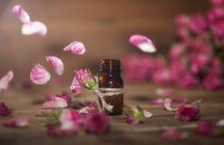 Petróleo essencial de Rosa Imagem de Stock