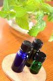 Petróleos essenciais com ervas Fotografia de Stock