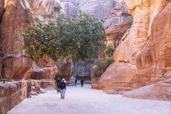 Petra峡谷岩石狭窄的段落的游人在约旦 Petra是科教文组织世界遗产自1985年以来 免版税库存照片