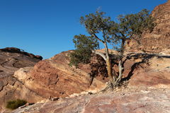 Petra沙漠石头和树在约旦 免版税库存照片