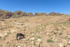 Petra,约旦岩石沙漠风景  库存图片