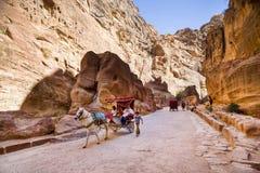 Petra,约旦- 2017年3月9日, :马运载游人throug 免版税图库摄影