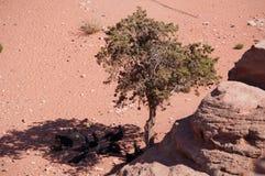 Petra,考古学公园,约旦,中东 免版税库存图片