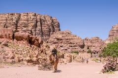 PETRA, ΙΟΡΔΑΝΙΑ - 28 ΑΠΡΙΛΊΟΥ 2016: Βεδουίνο άτομο στην καμήλα Στοκ Εικόνες