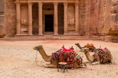 Petra Καμήλες στο Υπουργείο Οικονομικών Στοκ φωτογραφία με δικαίωμα ελεύθερης χρήσης