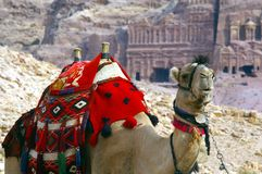 PETRA της Ιορδανίας καμηλών Στοκ φωτογραφία με δικαίωμα ελεύθερης χρήσης