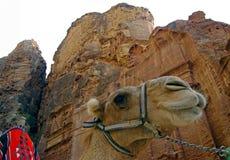 petra Иордана верблюда Стоковые Изображения RF