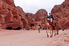 petra Иордана верблюдов Стоковое Фото