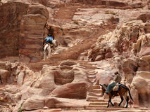 Petra 峡谷 免版税库存照片