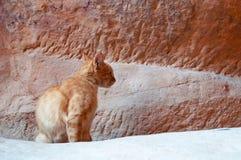 Petra, Archeologiczny park, Jordania, Środkowy Wschód Obrazy Stock