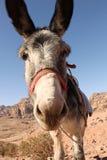 Petra-Burro Foto de archivo